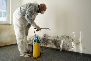 mould removal Parkdale
